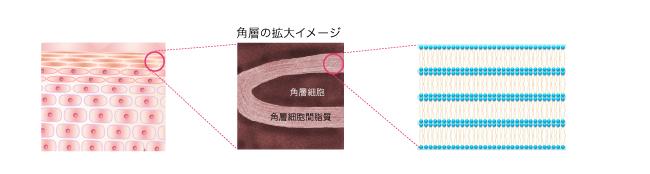 ラメラ構造の図
