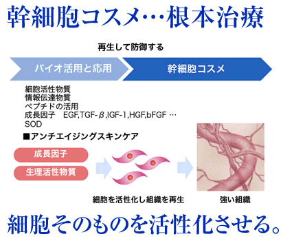 幹細胞コスメは根本治療